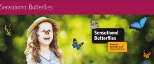 Sensational Butterflies at Natural History Museum